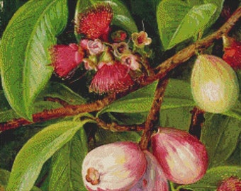 Fruit and Flowers of a Rose-Apple PDF Cross Stitch Pattern