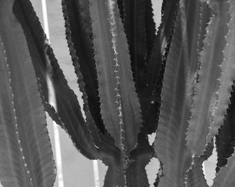 Cactus Succulents Boho Desert Photography - Black and White, Bohemian, Succulent, Fine Art, Wall Art Print