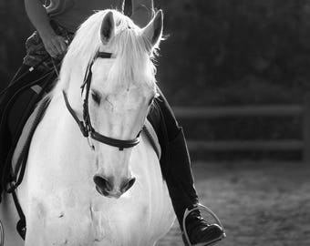 Horse Photography, Black and White Photo of a Rider on Horseback,  Horse Riding Rural Western Photograph Farm Decor Art White Horse Canvas