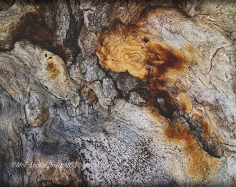 Abstract Tree Photo | Tree Bark Photo Art | Macro Forest Photo | Abstract Woodlands | Abstract Nature | Big Bear Photo | California Nature