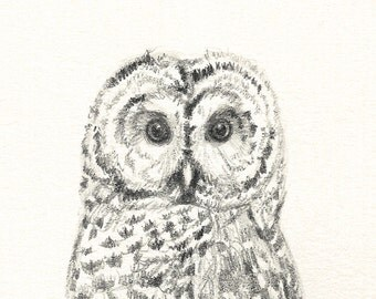 66 Tiny Owl Greeting Card