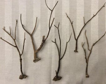 Brown Sea Fan Branches (Set of 5)