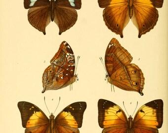 Butterflies exotic prints antique 1897 67 printable jpegs