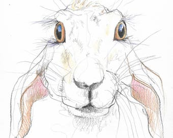 Hare #04 - Original A4 pencil and coloured pencil Drawing - suitable gift, wildlife, Hares, rabbit, bunny, rabbits, bunnies - cute