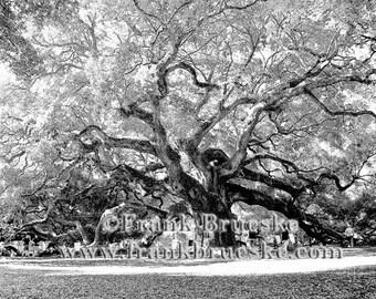 Angel Oak, Angel Oak Tree, Charleston SC, Beautiful Oak Trees, Old Oak Trees, Black & white Photography