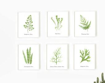 Fern Prints, Set of 6 Prints, Botanical print set, Watercolor Leaf Print, Fern Wall Art, Kitchen Decor