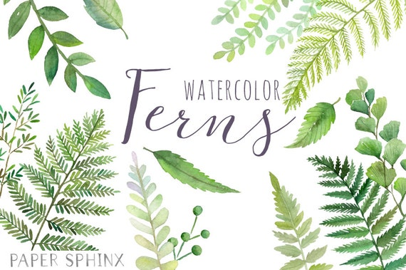 Watercolor ferns clipart forest leaves clipart for Watercolor greenery