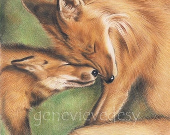 Fox Art Print - Wildlife art print of a fox drawing - Print of a colored pencil drawing of foxes