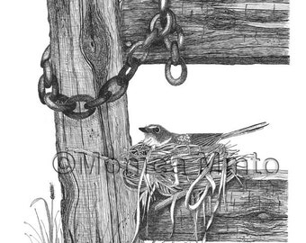 Fine Art Print from Pen Ink Original Bird on Nest Waiting Patiently by Monica Minto