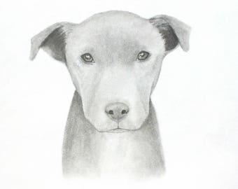Custom Dog Portrait, Custom Pet, Original Graphite Drawing, Pitbull Original Art, Dog Portrait, 8x10 Drawing, Animal Lover Gift