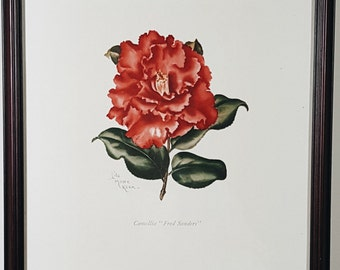 """SALE! 50s Vintage Framed Camellia Print Lithograph by Lila Moore Keen, Camellia """"Fred Sanders"""""""