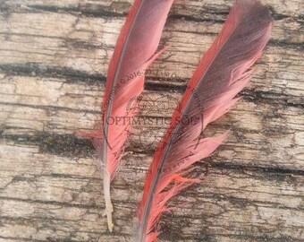 Yogananda cardinal feather photograph, cardinal feather photo, cardinal, feather photo, yoga art, spiritual art, mystical art, meditation
