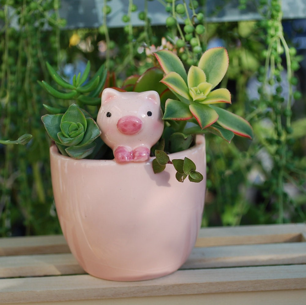 Cute Pink Pig Planter With Live Succulents
