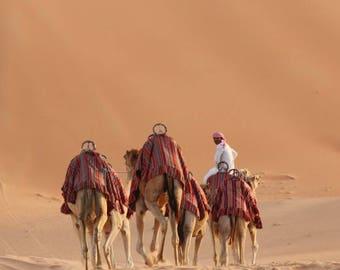 desert, middle east, camels, nature
