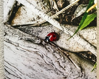 Ladybug , fine art photography by Anja Whitemyer, Janasredroom, Jannasredroom