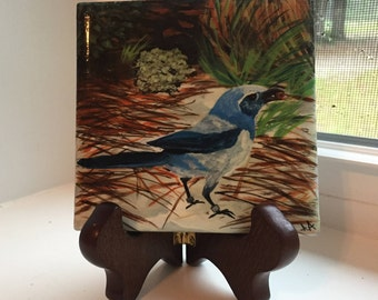 Hand painted tile, Florida Scrub Jay