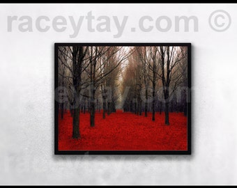 "The Red Forest Nature Photography Rustic Wall Decor Bare Trees  Fine Art ""Fiery Autumn"""
