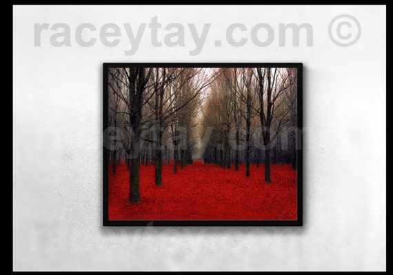 "The Red Forest Nature Photography Rustic Fall Decor Bare Trees  Fine Art ""Fiery Autumn"""