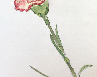 Study of a Carnation - Original Watercolor