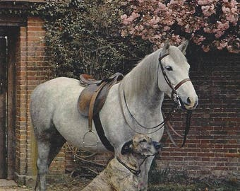 Us Color Types - Vintage 1940s Photogravure Horse and Hound Postcard