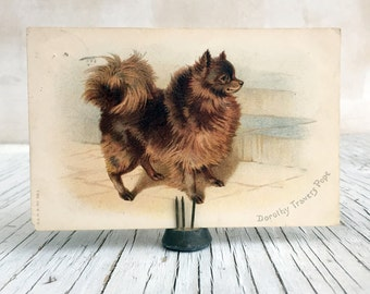 "Vintage postcard of a ""Faithful Friend"": Pomeranian dog. For dog lover or postcard collector."