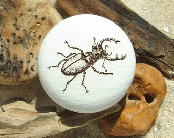 Stag beetle wood engraving insects - furniture knob furniture knob beetle - engraving - stag beetle - beech - incl. screw