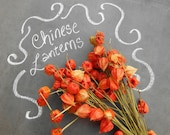 Bunch of Real Chinese Lanterns Natural Fall Decor Physalis Stems of Japanese Lanterns Dried Bright Yellow Orange Seed Pods Thanksgiving