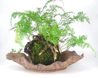 Ceramic Bark Pot, Tan Planting Tray, Fluted Bonsai Planter, Ochre Succulent Planter, Shallow Oval Plant Pot, Bonsai Accent Pot 11-16-29