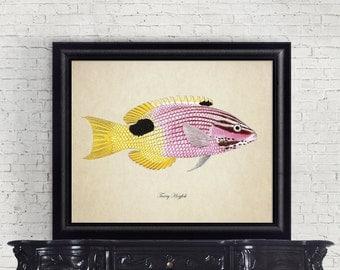 Botanical Print, Tropical Fish Print, Tarry Hogfish Print, Vintage Natural History Print, Fish Print, Tarry Hogfish Reproduction SL016