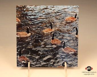 Geese Flock on Brushed Aluminum