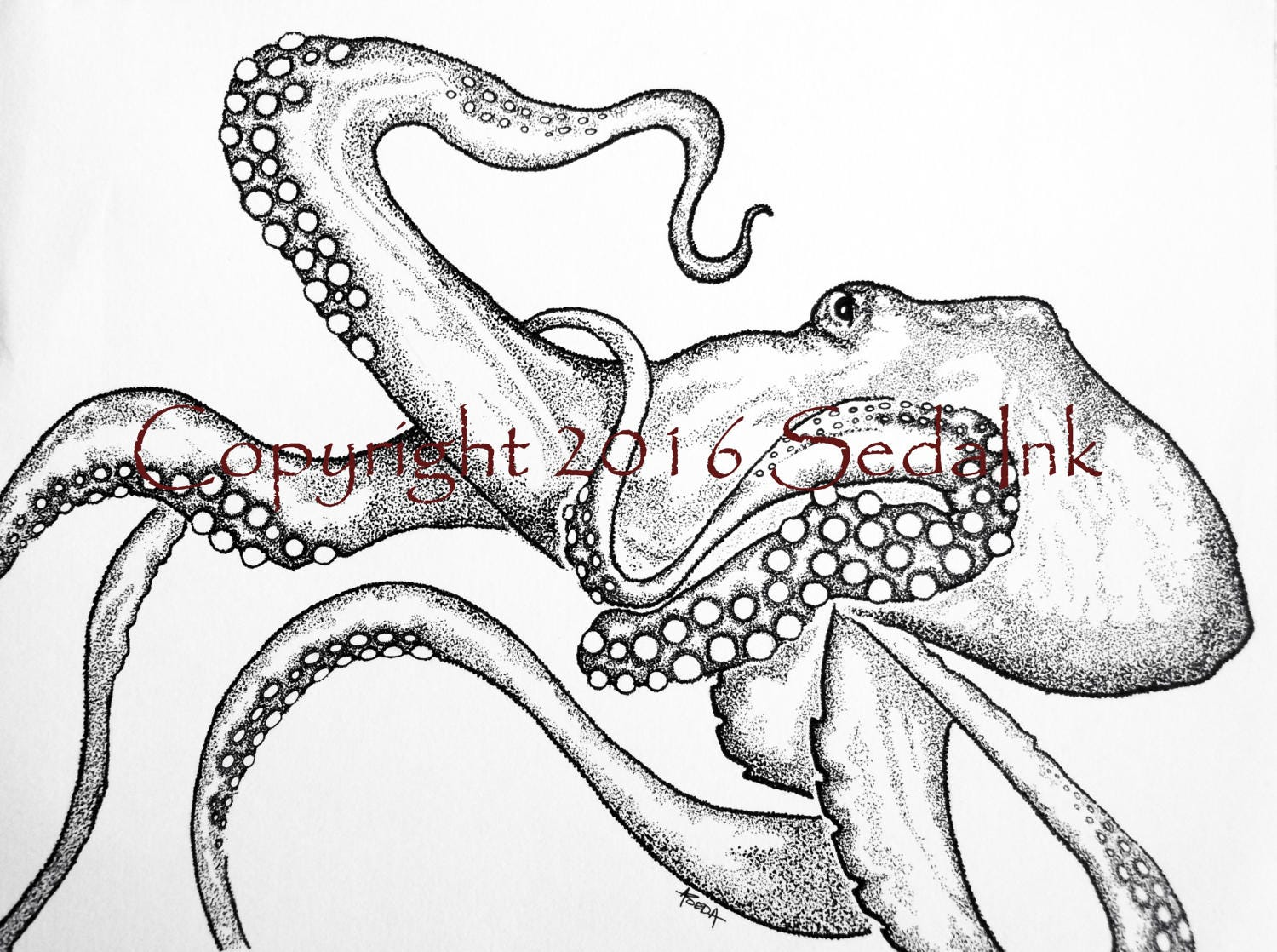 Octopus art print octopus drawing pen and ink animal print for Disegno polpo