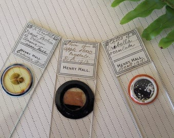 Set of 3 early 1900's microscope slides, steampunk