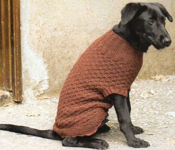 Dog Sweater Coat Knitting Pattern Knit Dog Sweater Coat Knitting