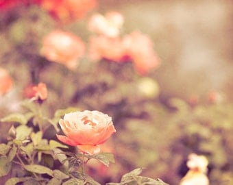 Flower Photography, Nature Print, Coral Wall Decor, Garden, Orange, Rose Photo, Large Nature Wall Art, Traditional Wall Decor, Floral Art