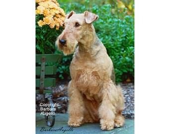 Airedale Terrier, Airedale Terrier Flag, Airedale Terrier Gift, Airedale Terrier Art, Airedale Terrier