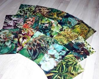 Vintage botanical prints - Indoor plant print set - Botanical postcard set- Scrapbook ephemera - Plant postcards - Vintage nature ephemera