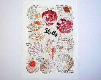 Shells Nature Print