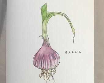 Garlic - Garden Vegetable Print (unframed) A4
