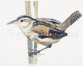 Wren on reed watercolor print