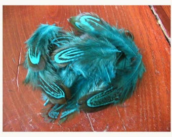 Lot of 50 PHÉAS blue feathers