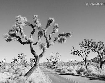 Joshua Tree Fine Art Photography Black and White Photo Photo Print (Unframed, Canvas, Framed, Metal or Acrylic)