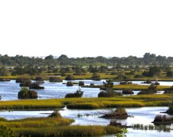 NC Marshland Photograph