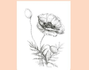 Poppy drawing, Black and white sketch art,  original pen and ink flower artwork, botanical art, floral art sketches, poppy flower 9x12