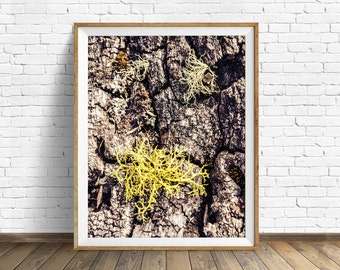 "nature photography, moss, bark, large art, large wall art, instant download printable art, digital download, nature prints - ""Thrive"""