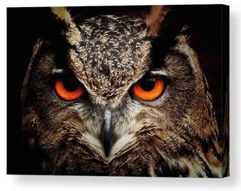Owl Eyes Photo Canvas Art  A4, A3, A2, A1