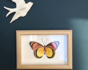 Reproduction butterfly cut and painted in watercolor l + framework