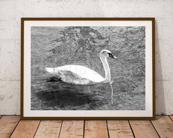 Swan Print, Bird Wall Art, Bird Photography, Bird Art Print, Bird Artwork, Bird Decor, Bird House Decor, Bird Nursery Decor, Animal Wall Art