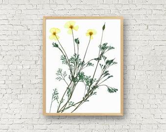 California Poppy - Pressed Plant Print - California Plant Art - California State Flower - Poppy - Timeless Wall Art - Herbarium Art Print