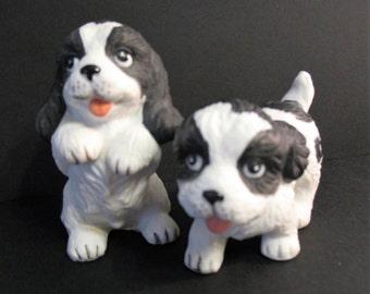 Homco Spaniel Puppies