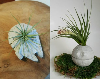 Star Wars Death Star and Millennium Falcon Concrete Planters with Air Plants